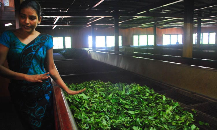 Tea factory Kandy