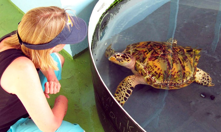 sri-lankan-tour-guide-tour-packages-5-kosgoda-turtle-hatchery