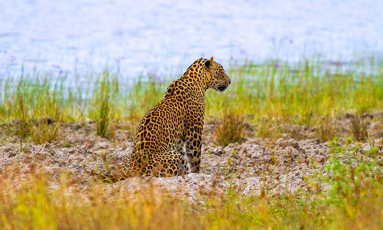 sri-lankan-tour-guide-tour-packages-5-wilpattu-national-park