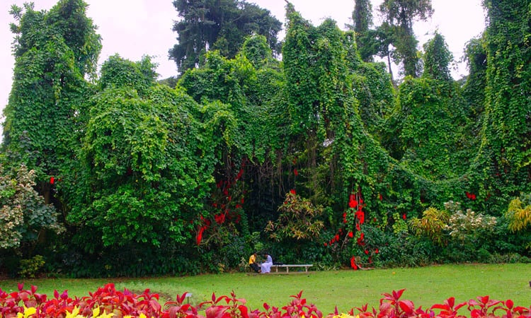 sri-lankan-tour-guide-tour-packages-6-peradeniya